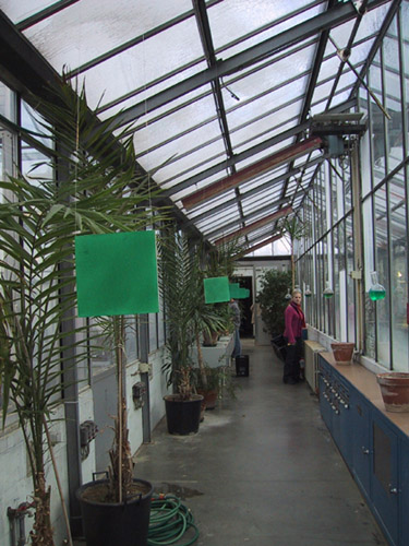 Installation dans une serre paysage et patrimoine sans fronti re for Installer une serre de jardin